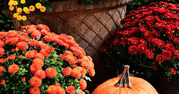 Fall Flowers Potted Containers County Line Fall Holidays Pinterest Fall