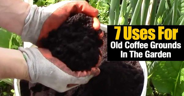 Coffee Grounds In The Garden Wait What Are You Doing