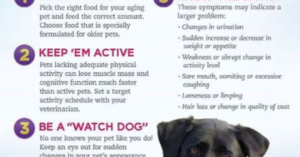 Senior Dog Care Senior Dogs Care Senior Pet Care Pet Health