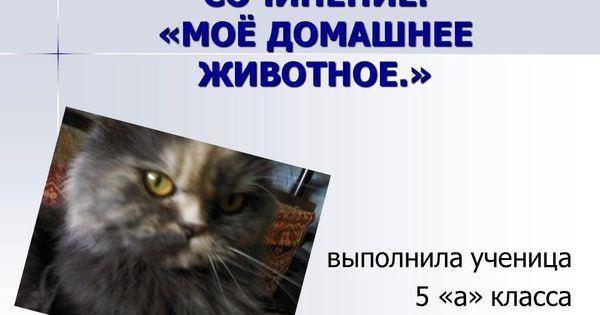Sochinenie Dlya 3 Klassa Na Temu Moyo Domashnee Zhivotnoe Sobaka Zhivotnye Domashnee Zhivotnoe Klass