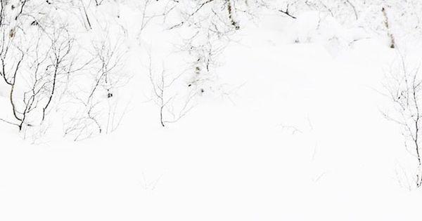 #Letitsnow, Winter, White, Snow, reindeer