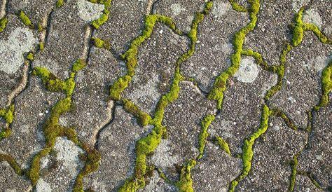 Eliminer la mousse sur une terrasse plants gardening - Mousse sur terrasse beton ...
