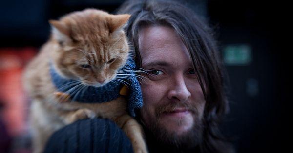 bildesøk google cat people oslo