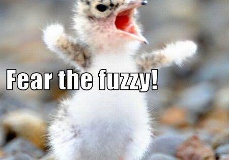 The Fuzzy Meme Wwwpicsbudcom