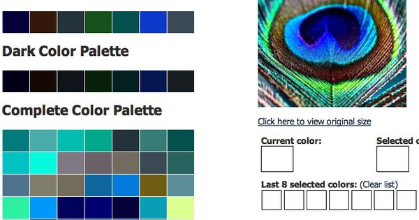Peacock Feather With Css Color Palette Generator For