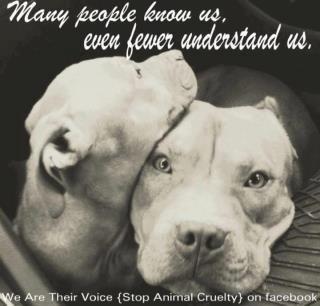 Pitbull Quotes | Pitbulls deserve better. I agree and I will ...