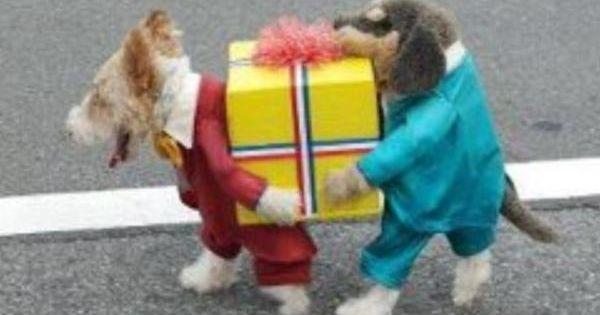 Best dog costume ever! HalloweenCostume