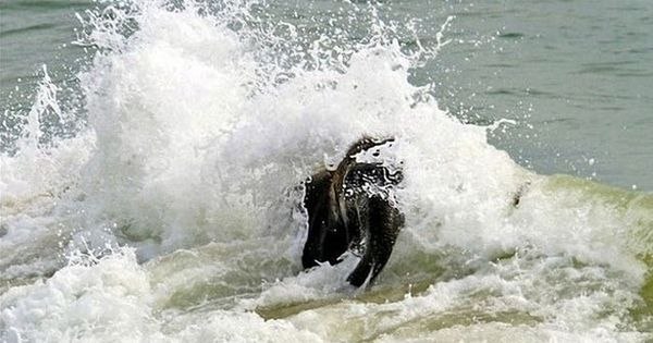 This is pure happiness. Baby elephant meets the sea for the first