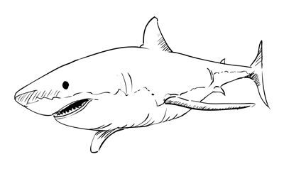 how to draw a shark easy step by step