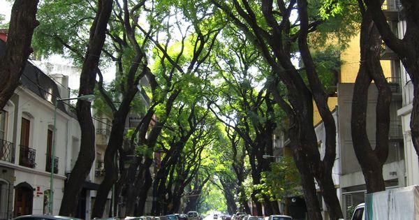 Una calle en palermo buenos aires argentina for Arboles perennes en argentina