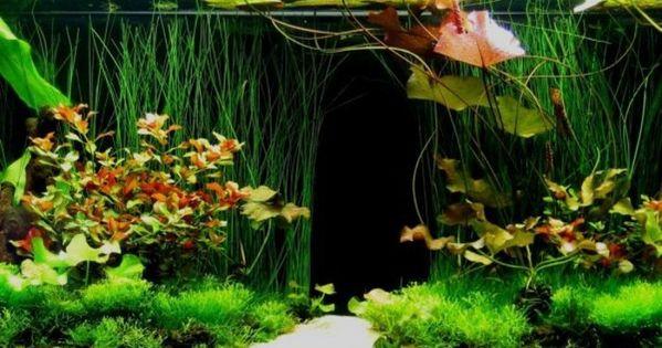 tropische aquarium einrichtung tropische wald aquarium deko, Kuchen