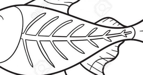 X Ray Fish Coloring Page Youngandtae Com Fish Coloring Page Coloring Pages Fish Drawings