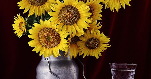 sunflowers have a deep sentimental meaning for me pretty things pinterest sunflowers. Black Bedroom Furniture Sets. Home Design Ideas