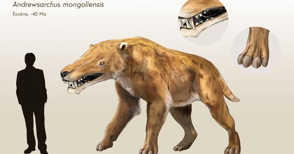 Andrewsarchus mongoliensis reconstruction. ©Jean-Loup ...