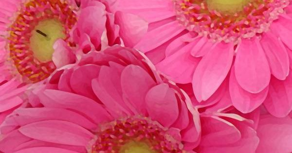 Love Pink Daisies!