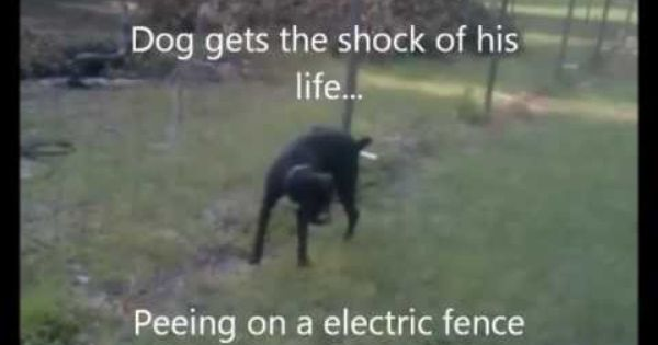 Dog Peeing On Electric Fence Youtube Funny Pinterest
