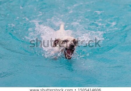 Stock Photo Puppy Swimming In The Pool Pet Dogs Polar Bear