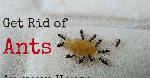 Get Rid Of Those Ants