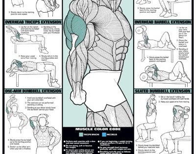 TRICEPS WORKOUT Professional Arm Weight Training Fitness ...  TRICEPS WORKOUT...