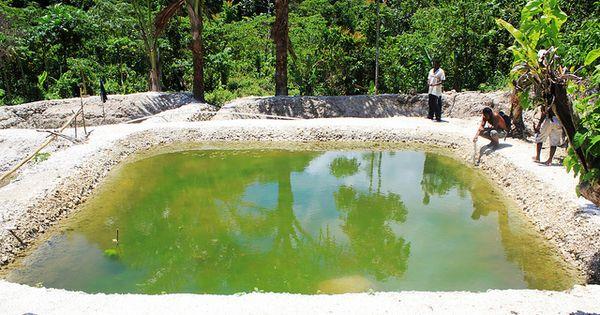 Farming tilapia in malaita solomon islands photo by for Garden pool tilapia
