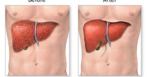 What organs and tissues have been successfully since 1950?