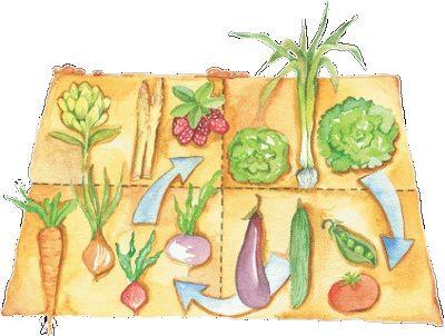 Planificar el huerto la rotaci n de cultivos cultivos for Que es la asociacion de cultivos