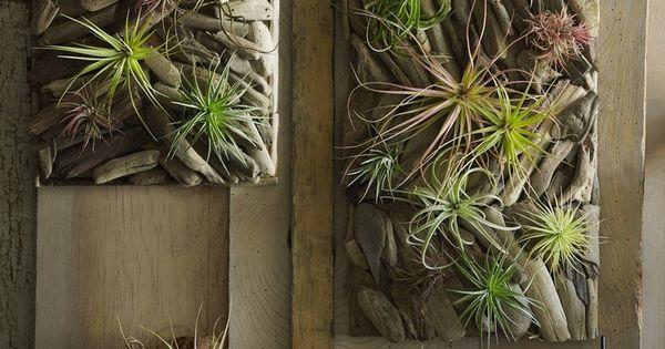 Déco bois flotté & plantes succulentes - la nature sinvite chez ...