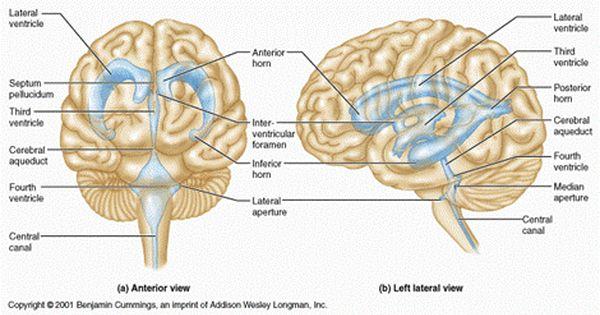 brain zapper pentru pierderea în greutate