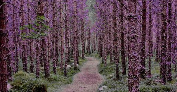 Purple Forest, Scotland   Take me there   Pinterest ...