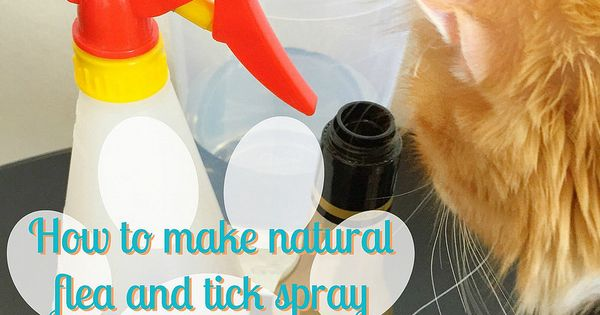 how to make bitter apple spray for cats