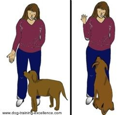 Dog Training Hand Signals A Picture Instructional Guide Dog