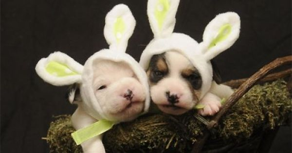 Here Comes The Easter Doggy Doggy Cute Animals Dogs