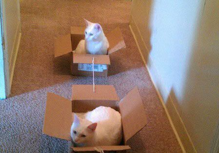 Scientists Have Found A Way To Successfully Walk Cats cute animals cat