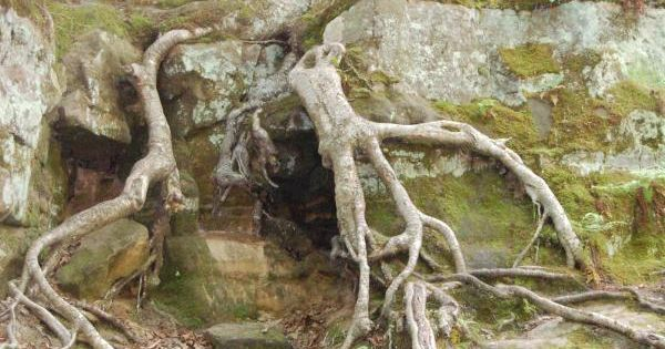 Root Pry [Weathering] | 6th Grade Earth Science: Geology ...