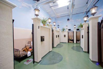 Barkley Park Suites At The Barkley Pet Hotel Spa Dog Boarding Kennels Dog Boarding Facility Pet Hotel