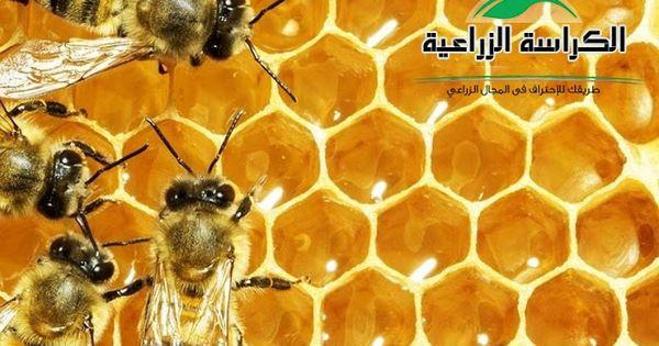 اضرار المبيدات الزراعية على النحل الكراسة الزراعية Honeycomb Science Friday This Or That Questions