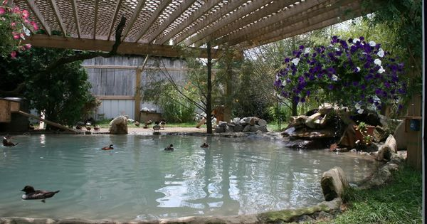 Duck Aviary Love the lattice roof.