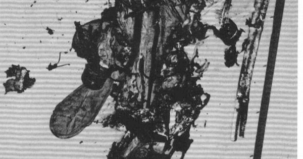 astronaut grissom death - photo #38