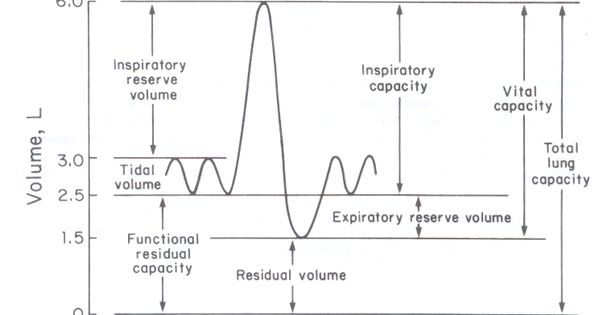 Lung Volumes & Capacities | Respiratory Therapy Life | Pinterest