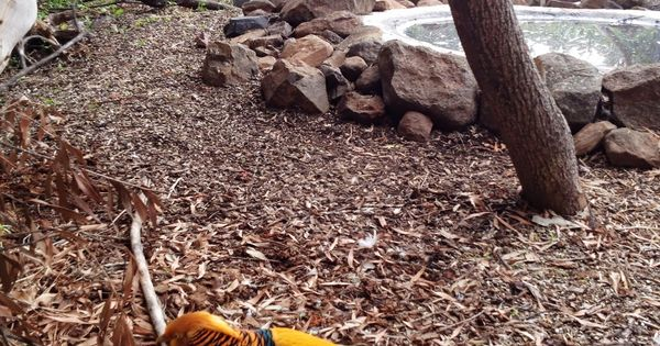 Golden pheasant aviary with trees pond aviaries for 7194 garden pond