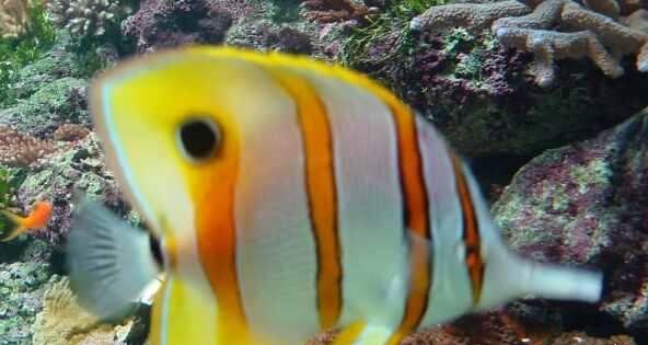 صور اسماك ملونة صور اسماك الزينة Fish Pet Pets Animals