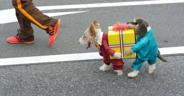 Cutest dog costume ever