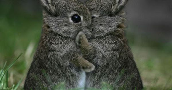 Image detail for -Super cute baby animals pictures 1...A BABY BUNNY!!!