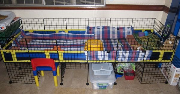 Best guinea pig cage the c c guinea pig cage project for Coroplast guinea pig cage for sale
