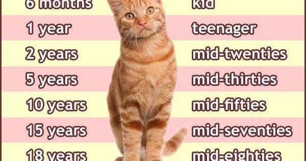 bleach and cat urine