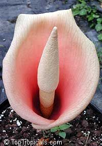 Pin On Unusual Plants Flowers