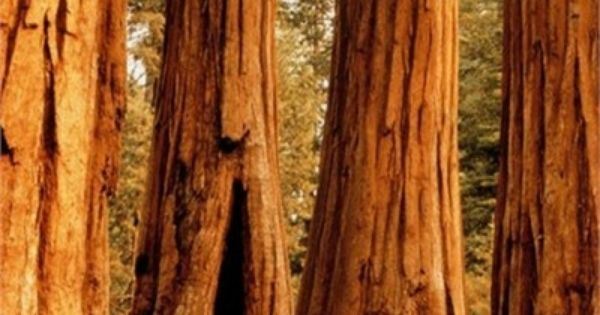 50 Places to visit before you die, Sequoia National Park, California