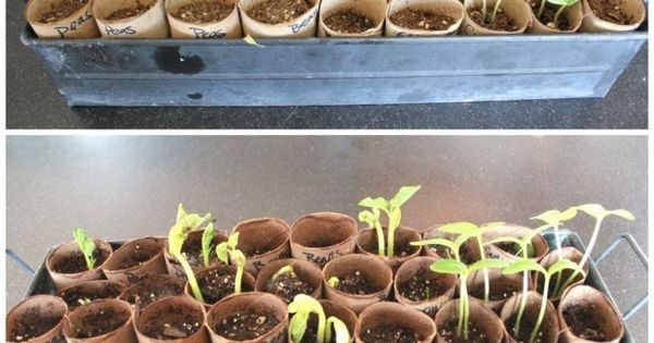 toilet paper roll seed starters - just might be more practical as