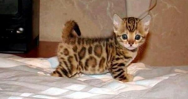 Too cute! kittens cats pets animals
