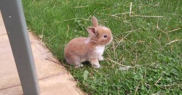 Pin By Paulette Kelley On Bunny Cute Bunny Pictures Rabbits For Sale Cute Animals